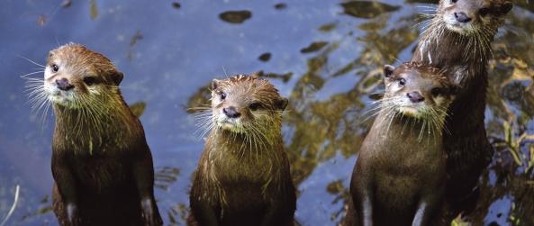 סיור בגן החיות הלימודי