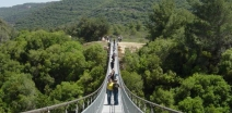 Hanging Bridges in Nesher
