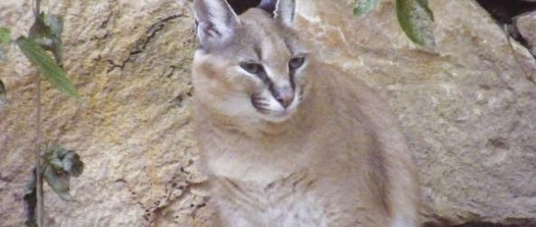 גן החיות הלימודי בחיפה
